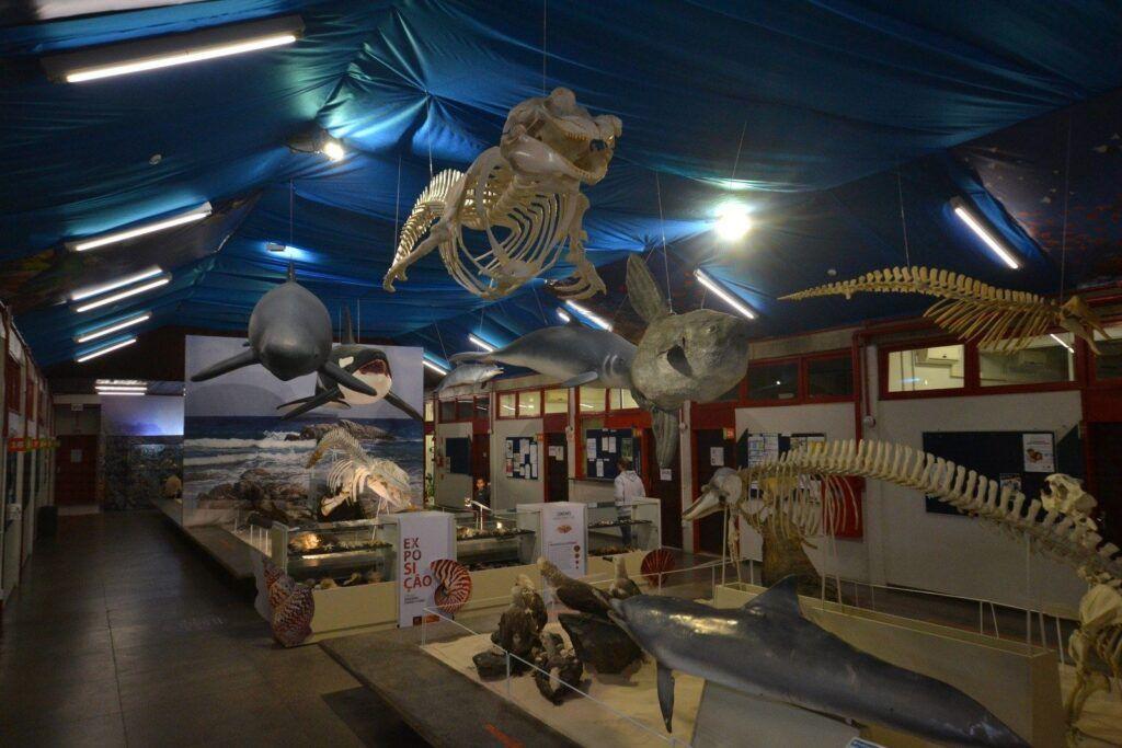 museu unesc marinho